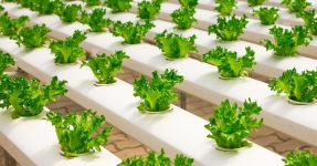 Hydroponics organic farming, Pixabay