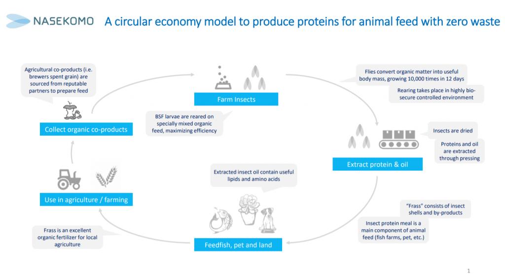 Nasekomo's circular economy model
